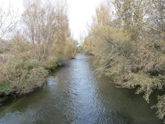 Canal de Castilla (Alberto Rodríguez García)