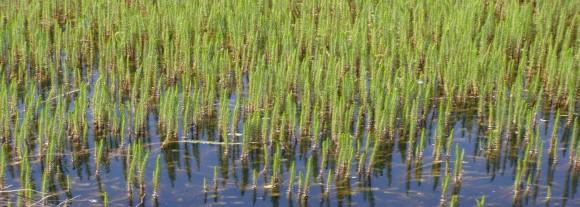 Orillas del Canal (Alberto Rodríguez García)